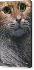 Cropped Cat 4 Acrylic Print