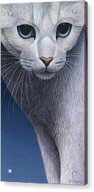 Cropped Cat 5 Acrylic Print by Carol Wilson