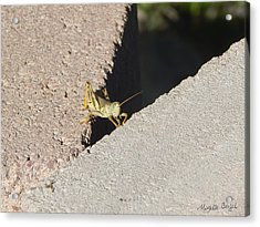 Cross Over Grasshopper Acrylic Print
