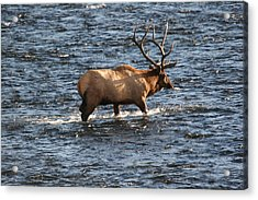 Crossing The Madison Acrylic Print by Dave Clark