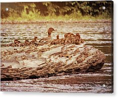 Crossing The River Acrylic Print by JAMART Photography
