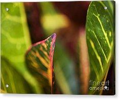 Croton Leaf Macro I Acrylic Print