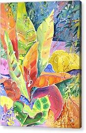 Croton Ll Acrylic Print
