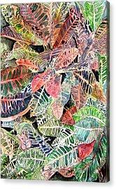 Croton Tropical Art Print Acrylic Print by Derek Mccrea