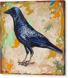 Crow #1 Acrylic Print by David Palmer