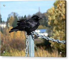 Crow Acrylic Print by Anastasia Michaels