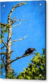 Crow In An Old Tree Acrylic Print by Ken Morris