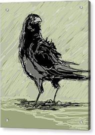 Crow In Rain Acrylic Print by Peggy Wilson
