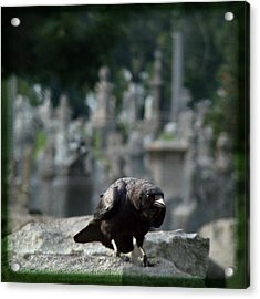 Crow In The City Of Stone Acrylic Print by Gothicrow Images