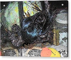 Acrylic Print featuring the mixed media Crow Mid Flip by YoMamaBird Rhonda