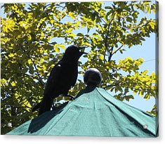 Crow On An Umbrella With Food Acrylic Print by AJ Brown