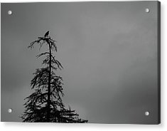Crow Perched On Tree Top - Black And White Acrylic Print