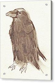 Crow Acrylic Print by Sarah Lane