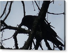 Crow Silouette Acrylic Print by Dawna Raven Sky