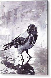 Crow Watercolor Acrylic Print