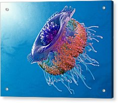 Crown Jellyfish Acrylic Print by Henry Jager