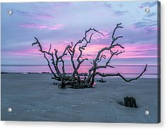 Crown Of Thorns Acrylic Print