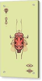 Crowned Horn Bug Specimen Acrylic Print