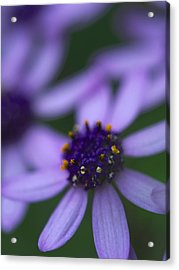 Crowned With Purple Acrylic Print