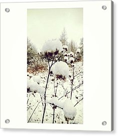 Crowns Of Snow#winter #snow #floral Acrylic Print