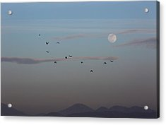 Crows Coming Home To Roost Acrylic Print by Robin Street-Morris