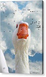 Cry Of The Wild Goose Acrylic Print