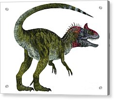 Cryolophosaurus Dinosaur Tail Acrylic Print by Corey Ford