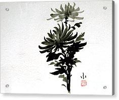 Crysanthemums Acrylic Print
