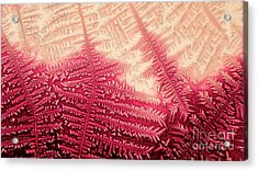 Crystal Of Ammonium Chloride Acrylic Print