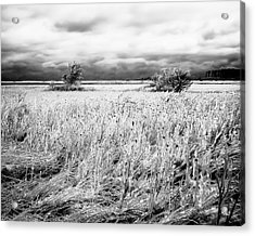 Crystal Grass Acrylic Print