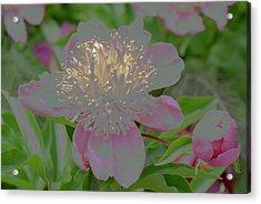 Crystalline Flower Acrylic Print
