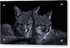 Cuddle Buddies  Acrylic Print by Brian Cross
