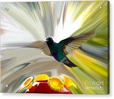 Cuenca Hummingbird Series 1 Acrylic Print