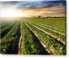 Cultivated Land Acrylic Print by Carlos Caetano