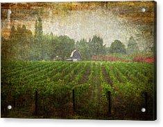 Cultivating A Chardonnay Acrylic Print