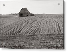 Cultivation Acrylic Print by Lionel F Stevenson