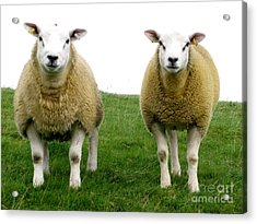 Cumbrian Sheep Acrylic Print by Ruth Hallam