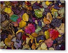 Curbside Leaf Litter Acrylic Print by Robert Ullmann