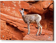 Curiosity Stop Acrylic Print by James Marvin Phelps