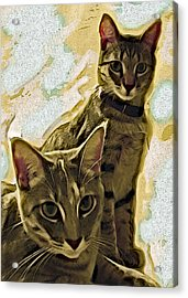 Curious Cats Acrylic Print by David G Paul