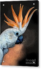 Curious Cockatoo  Acrylic Print by Norman  Andrus