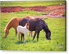 Curious Colt And Mares Acrylic Print