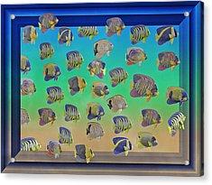 Curious Fish Acrylic Print