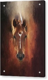 Acrylic Print featuring the photograph Curious Gaze  by Toni Hopper