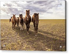 Acrylic Print featuring the photograph Curious Horses by Hitendra SINKAR