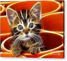 Curious Kitten Acrylic Print by Pamela Johnson