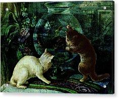 Curious Kittens Acrylic Print by Sarah Vernon