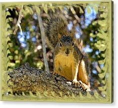Curious Squirrel 2 Acrylic Print by Kae Cheatham