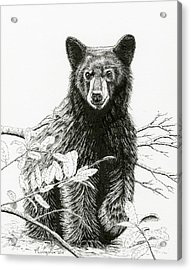 Curious Young Bear Acrylic Print