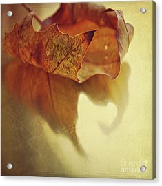 Curled Autumn Leaf Acrylic Print by Lyn Randle